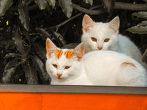 Katter 8 Royaltyfria Bilder