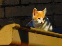 Katter 10 Arkivbilder