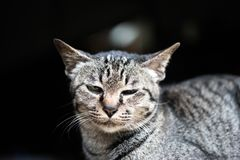 Katter blir vid fönstret i eftermiddagen royaltyfri foto