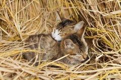 katter cling tillsammans arkivbilder