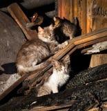 Katter efter branden Ryssland royaltyfri fotografi