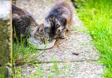 katter för äpplebentecknad film som äter fisken, blidkar en annan vektor för bryderifrågeplats två Arkivbilder