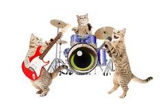 Katter för musikbandmusiker arkivbild