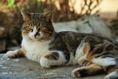 Katter frågar inte, dem tar precis allt som de behöver royaltyfri foto
