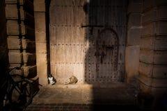 Katter framme av den antika dörren Arkivbild