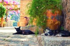 Katter i den Deia byn Arkivfoton