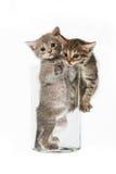 Katter i ettexponeringsglas Arkivbilder