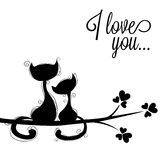 Katter i förälskelser Royaltyfria Bilder
