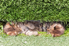 Katter i gräset Arkivfoton