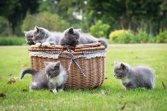 Katter i korgen Royaltyfri Bild