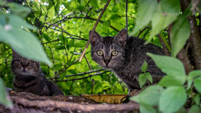 Katter i naturen Royaltyfria Bilder