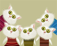 Katter i sweatrar Fotografering för Bildbyråer