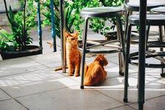 Katter i Thailand Arkivfoton