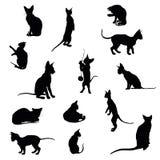 katter inställda silhouettes Royaltyfri Fotografi