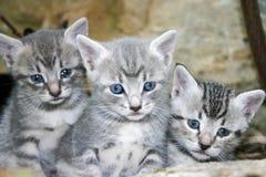 katter little Arkivfoto