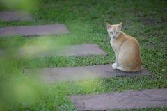 katter little royaltyfri fotografi