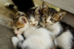 katter little tre fotografering för bildbyråer