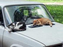 Katter och bil Arkivbilder