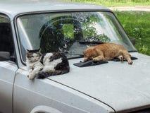 Katter och bil Royaltyfria Bilder