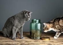 Katter och Cat Food i exponeringsglas arkivfoton
