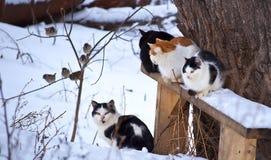 Katter och fåglar Arkivfoto