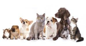 Katter och hundkapplöpning arkivbild