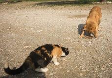 Katter och hundkapplöpning Royaltyfri Fotografi