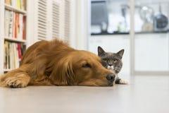 Katter och hundkapplöpning Arkivbilder