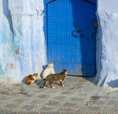 Katter på den blåa gatan i Medina Chefchaouen Arkivfoton