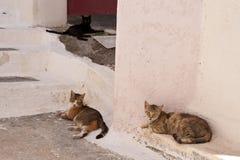 Katter på Samos Arkivbilder