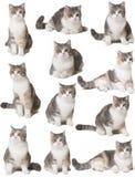 Katter på en vit bakgrund Arkivfoton