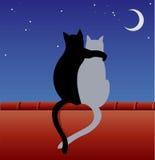 Katter på ett tak Arkivbild
