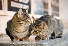 Katter på gatan Arkivfoto