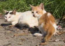 Katter på gatorna Arkivfoto
