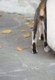 Katter på gatorna av Bangkok Royaltyfri Fotografi