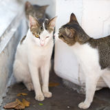 Katter på gatorna av Bangkok Fotografering för Bildbyråer