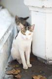 Katter på gatorna av Bangkok Arkivbild
