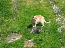 Katter på grönt gräs på den soliga dagen Royaltyfri Bild