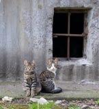 Katter på källarefönstret arkivfoto