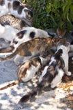 Katter på Samos Royaltyfri Foto