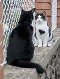 Katter på staket Royaltyfri Fotografi