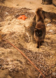 Katter på stranden, Mikonos, Grekland Royaltyfri Fotografi