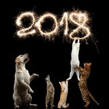 Katter på svart bakgrund Arkivfoton