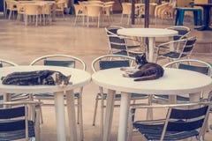 Katter på tabellerna i kafé Royaltyfri Fotografi