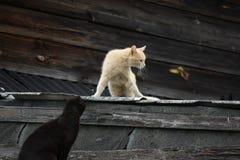 Katter på taket royaltyfria bilder