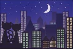Katter på taket av staden Arkivbild