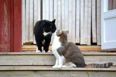 Katter på trappa Arkivfoton