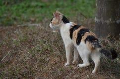 Katter som är klara att jaga Royaltyfri Fotografi