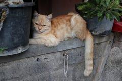 Katter som överst sover av väggen Fotografering för Bildbyråer