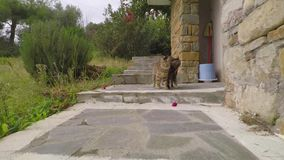 Katter som följer kameran stock video